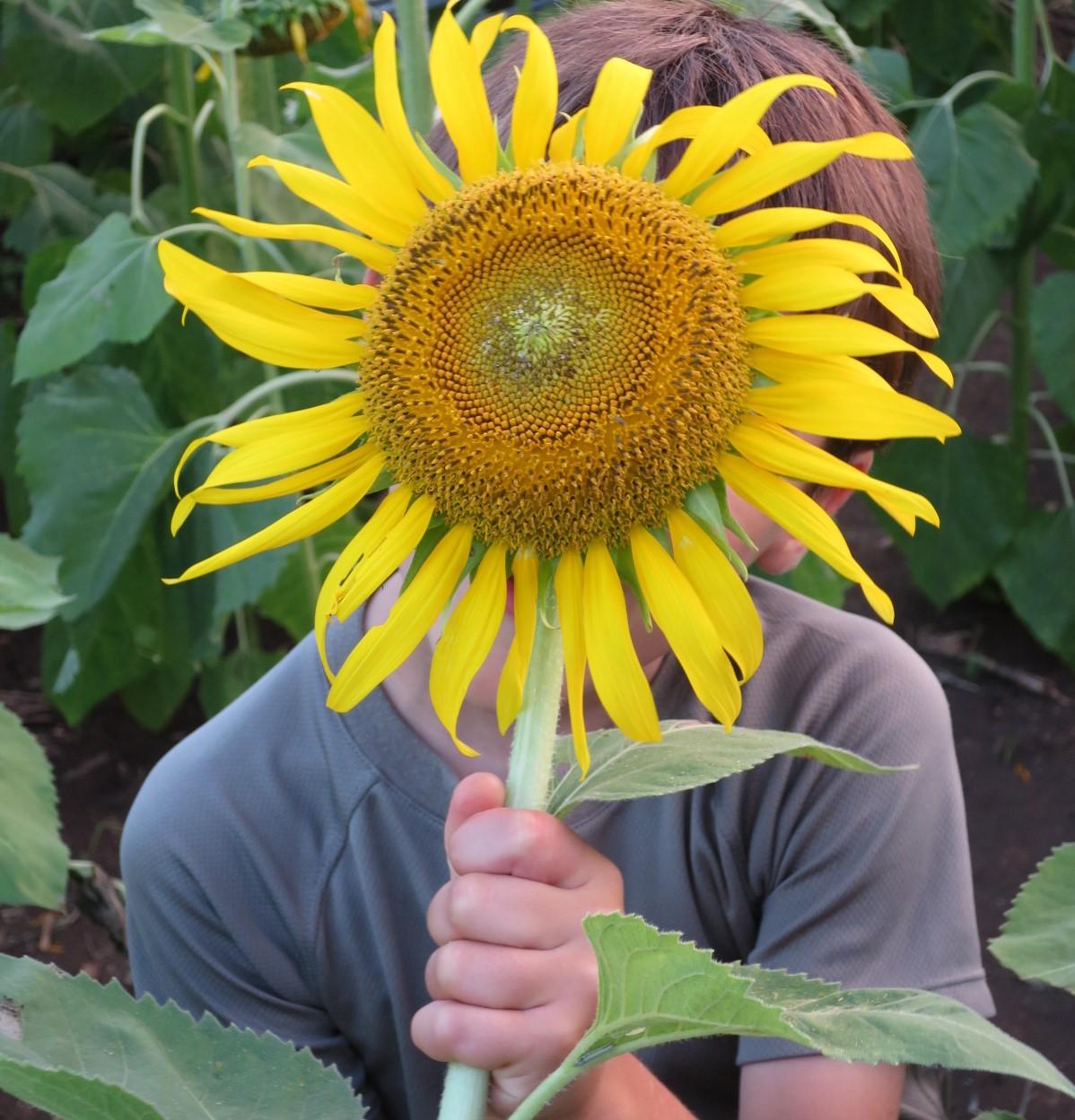 Cultiver son jardin, une activité à la croisée de nombreux ...